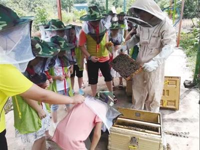 洪山:探秘蜜蜂园 了解蜜蜂重要性