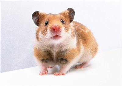 以色列科学家发明 测算动物性格新方法