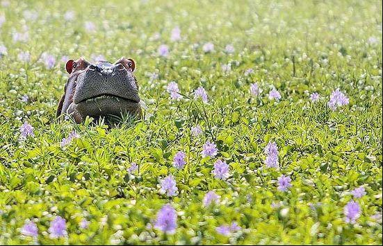 2009可爱动物大盘点:海豹观看日全食