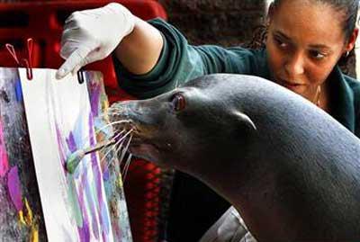 动物园激发动物绘画天赋 海狮作画别有风味